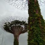 Деревья Аватара Сингапур