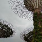 Деревья Аватара в Сингапуре