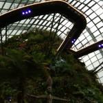 Тропический сад 2